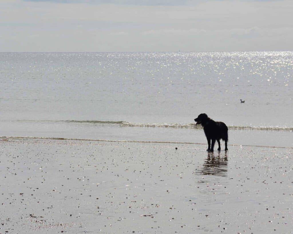 Bognor Regis Removals, Dog on Beach, Bognor Regis