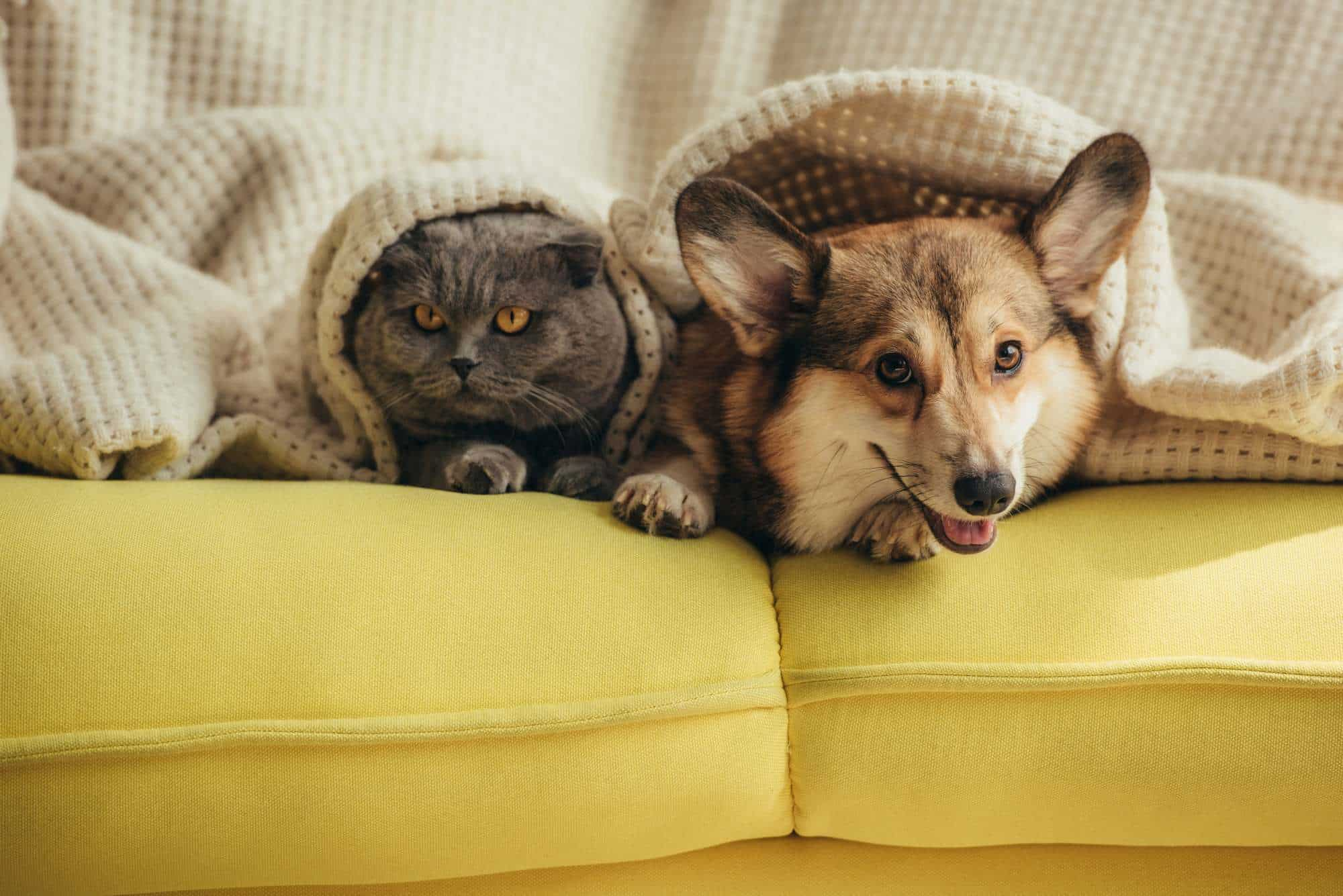 Moving To A New House with Pets – The Do's and Don't's