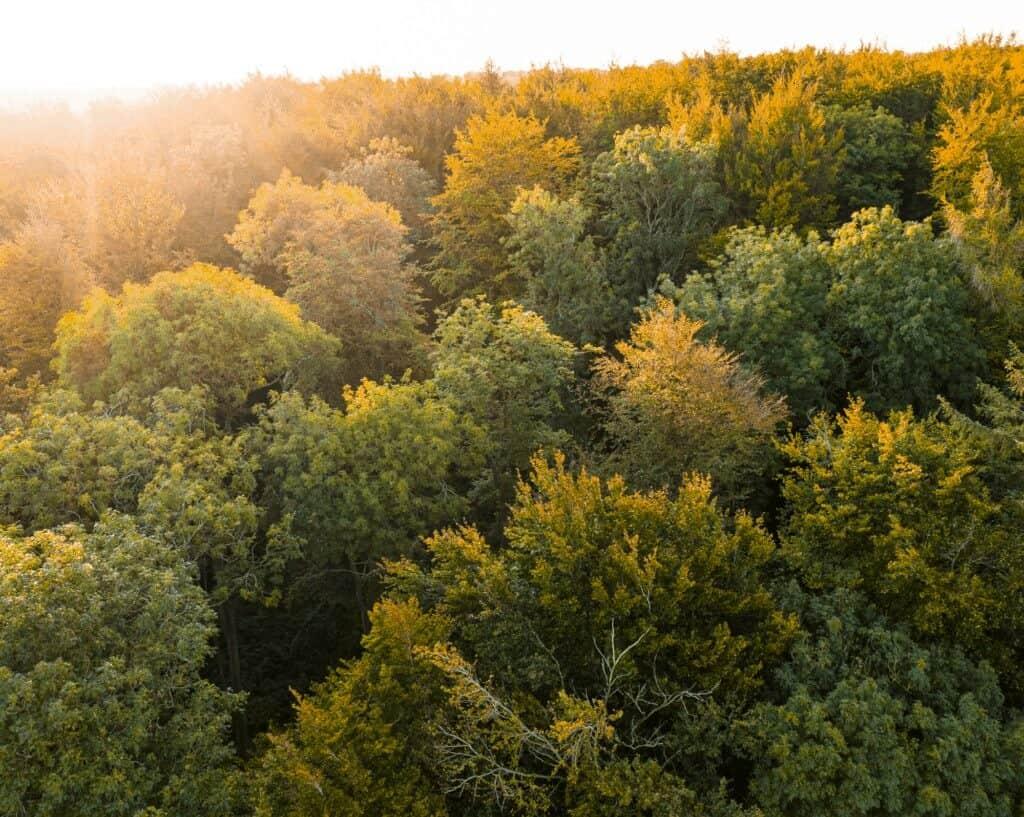 Autumn Forest in Waterlooville