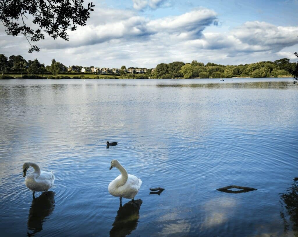 Petersfield Removals, Heath Pond in Petersfield